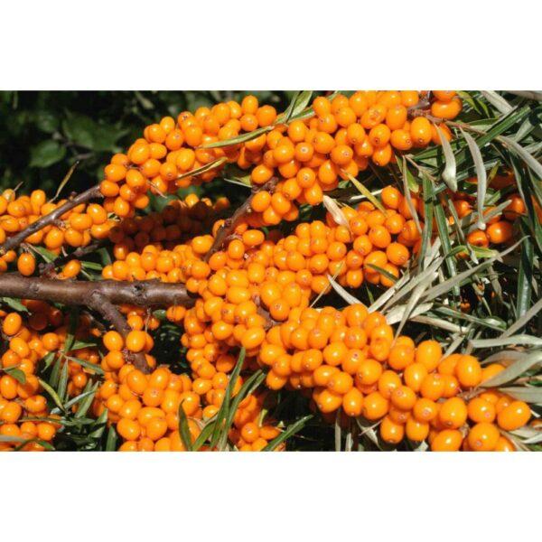 """Пюре Облепиха замороженное """"Fruits Rouges & Co"""" Франция, 1 кг."""